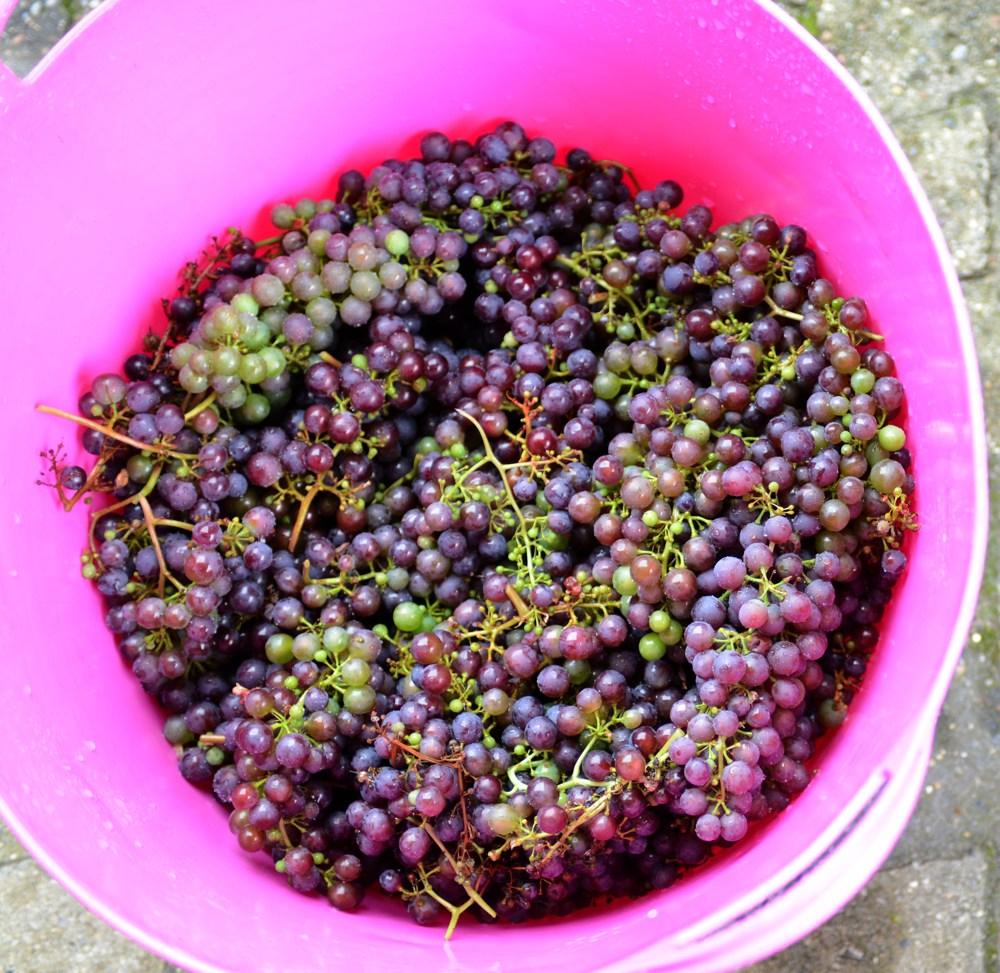 Rensede druer